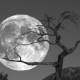 ๏~* The Moon !!! *~๏‏