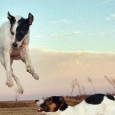 Dogs Can Fly! ,มะหมา เหาะได้!!