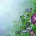 Flower Wallpapaer